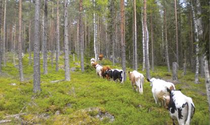 skogskor415