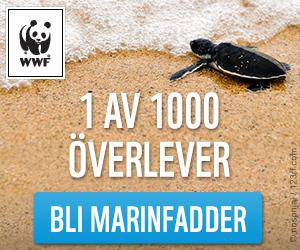 WWF Marinfadder