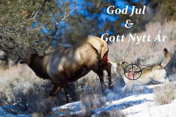God Jul Varg sliter sönder låren på elktjur